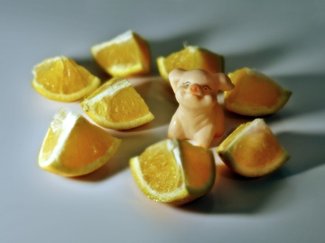 Swine amidst Oranges (0134)